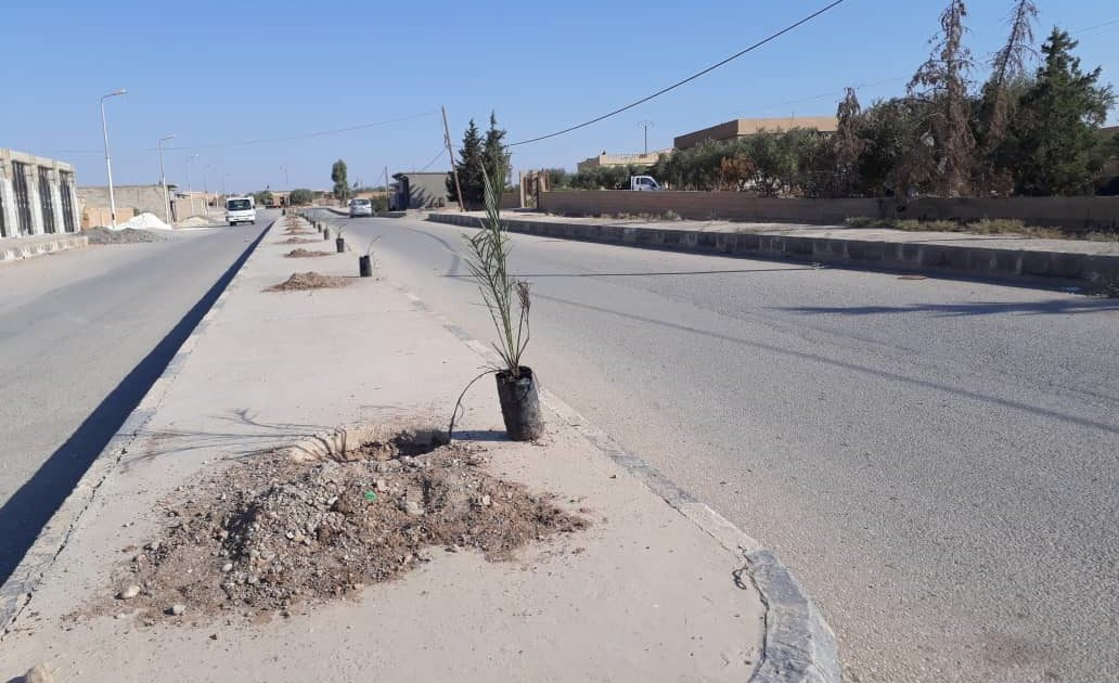 Photo of Cultivation Of 150 Palms In Safsafa Village