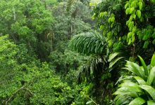 Photo of Earliest humans in the Amazon created thousands of 'forest islands' as they tamed wild plants