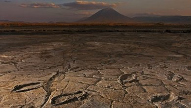 Photo of Africa's biggest collection of ancient human footprints has been found