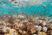 Photo of Scientists find highest ever level of microplastics on seafloor