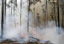 Photo of Smoke from Australian fires rose higher into the ozone layer than ever before