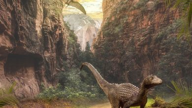 Photo of A tiny ancient relative of dinosaurs and pterosaurs discovered