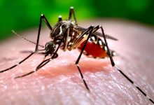 Photo of Genetically modified mosquitoes have been OK'd for a first U.S. test flight