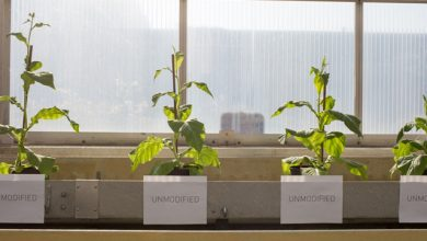 Photo of Photosynthetic hacks can boost crop yield, conserve water