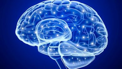 Photo of Research identifies 'volume control' in the brain that supports learning and memory
