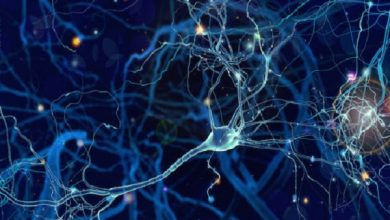 Photo of From the inside out: How the brain forms sensory memories