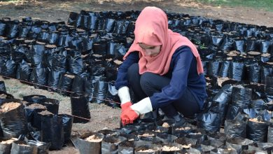 Photo of Despite the horrors of war… self-administration of Northern and Eastern Syria launches a huge afforestation project